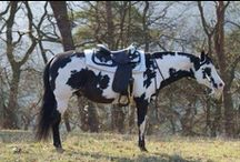color class / patterned horses / by Tami Grina-Sutton