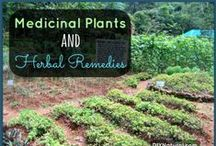 HEALTH: Medicinal Plants / by Terlyn Strong Dufrene