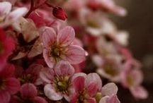 Life - Pretty Pretty Flowers