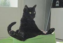Cats Doing Yoga