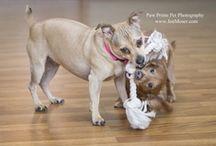 Paw Prints Pet Photography / www.JenMoser.com