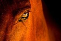horses / by Chris Rowles