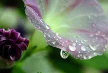 Secret Garden / Gods masterpieces!