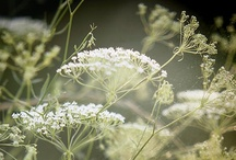 Flowers/Plants / Nothing but pretty pictures of flowers and plants. That's all. / by Yoshiko Yeto