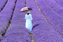 Perfect for Provence