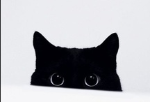 cats, chanel, other pretty things that begin with c / by Juliana Yang