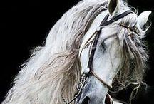 equestrian / Horses make me weak in the knees / by Gretel