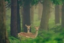 Mother Nature | Fauna and Flora / Animal and Plants / by Riccardo Mario Corato