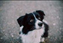 My border collie girl, Zara