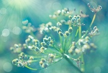 Wildflowers ✿ / Wildflowers * Seed Pods * Grasses * Meadow * Plants * Bokeh / by Lisa ★ Berry