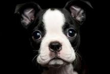 Cachorros / Los cachorros más adorables en este álbum