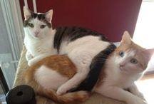 Jack & Billy / Rot, schwarz, frech, vorsichtig, nimmersatt, verschmust... es gibt einfach zu viele Adjektive, mit denen man die beiden Katzen-Geschwister beschreiben könnte. Bilder sprechen da mehr als 1.000 Worte.