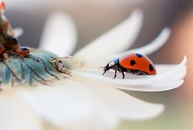 Insectum  #2 / Insects * Arachnids * Butterflies * Ladybugs  ★ See More at Insectum #1 & #3 ★ / by Lisa ★ Berry