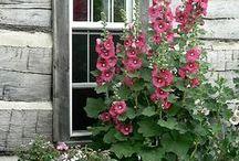 Gardens / by Lesley Ziegler