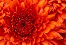 ★ Orange ★ / Orange * Tangerine / by Lisa ★ Berry