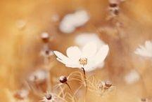 ★ Caramel ★ / Caramel * Soft Gold * Warm Brown * Honey * Camel / by Lisa ★ Berry