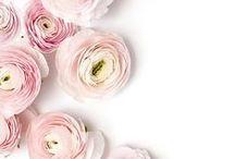 eu vejo flores / flores por todos os lados de todas as cores e de todos os formatos