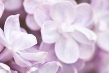 ★ Lilac ★ / Colour, Colour, Colour / by Lisa ★ Berry