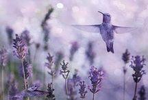 ★ Lavender ★ / Lavender * Violet / by Lisa ★ Berry