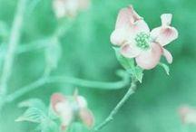 ★ Lucite Green ★ / Lucite Green * Fern Green * Spring Green * Paris Green * Spearmint * Jade * Dark Mint / by Lisa ★ Berry