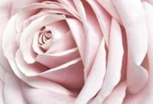 ★ Light Pink ★ / Light Pink * Pale Pink * Soft Pink  / by Lisa ★ Berry