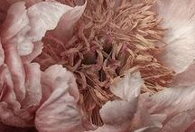 ★ Dusky Rose ★ / Dusky Rose * Dusty Rose * Vintage Rose * Antique Rose * Pink Mauve * Puce / by Lisa ★ Berry
