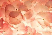★ Peach ★ / Peach Colour * Dark Blush / by Lisa ★ Berry