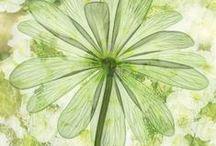 ★ Honeydew ★ / Honeydew Green * Pale Green / by Lisa ★ Berry
