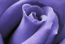 ★ Violet ★ / Violet * Purple / by Lisa ★ Berry