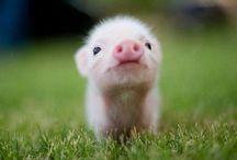 Animals / Cuteness!