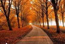 Autumn / Autumnal scenes, places to visit, and decoration ideas