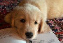 Animals / Dog is anyones best friend / by Bri