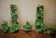 Wedding - Organic/Green