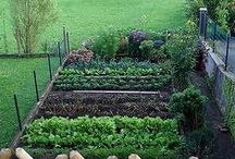 Garden   Beginning Small / In 2016 we started a very small attempt at a Garden at the McGough Homestead.  We have tomato plants, some strawberries and recently added a pepper plant.  Here is to hoping tomatoes from the garden will be added to the fall semester of Handmade U's meal plan!  www.handmadeu.com