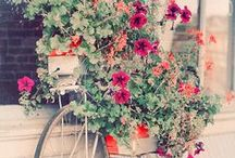 My lovely garden ❤️ / Dreams.... breathing.... and perfume / by n✿emi -