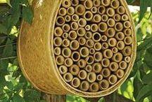Bees on the Herman Homestead / by Carolyn Herman