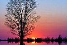 ♣I LOVE TREE! ♣ / by Consuelo Cavalcanti