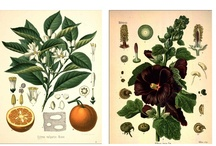 Botanical Illustration Love