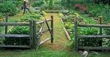 garden / Garden inspiration and how-tos.