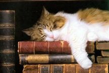 Books as Art / by RoseAnn