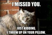 Meow! / by Kate Letarte