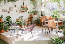 Gardens and Plants / Gathering ideaa for indoor and outdoor plants and decorations
