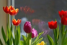 Seasons- Celebrating Spring