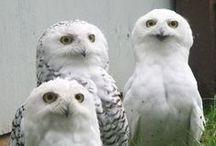 Owls / by Jean Stephens
