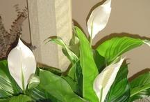 Home- Indoor Plants