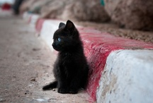 Meow / What greater gift than the love of a cat?  ~Charles Dickens  / by Kayla Mae