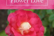 Flower Love | Images for Inspiration / Flower images and inspirations for alchemical healing and intuitive guidance. Roses, lavender, garden, bouquet, illustrations, arrangements. https://www.michellemariemcgrath.com/