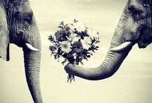 Elephant Love / by Christa Phelps