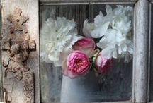Flower Love / by Christa Phelps