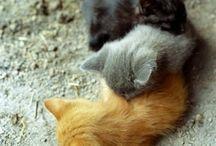 omg. it's fluffy.  / by Nicole Yonker